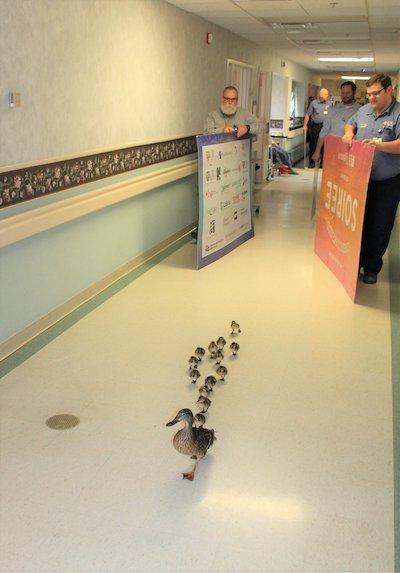 patinhos desfile hospital 1