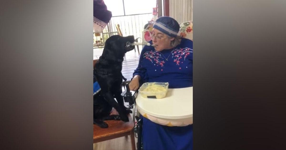 Cachorra dando comida na boca de dona