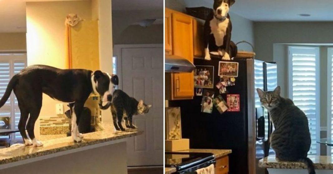 cão com gatos em casa