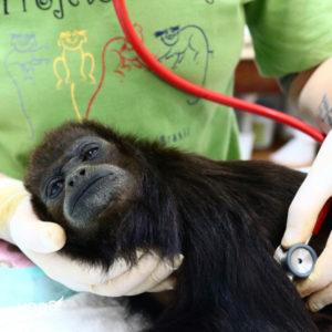 Projeto Mucky cuidando de macaco