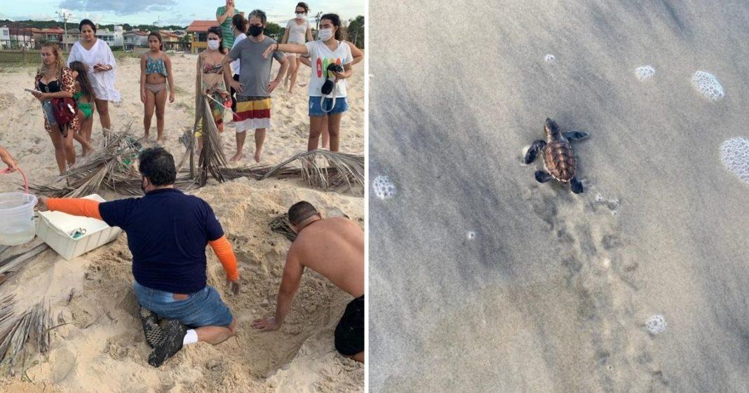 Tartaruga marinha filhote indo em direção ao mar pela primeira vez e Voluntários cavando areia para desenterrar ovos de tartarugas marinhas