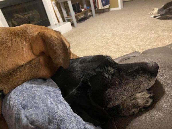 veterano adota cachorra 3