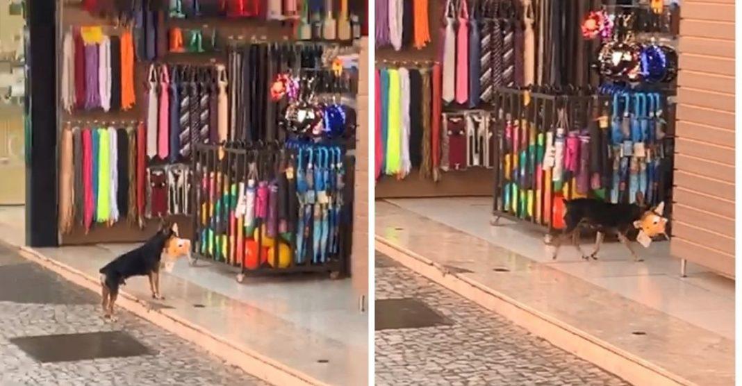 cachorrinho devolve urso de pelúcia furtado loja