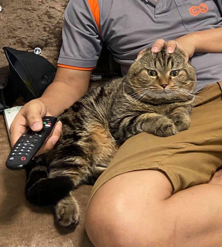 gato rouba marido da tutora