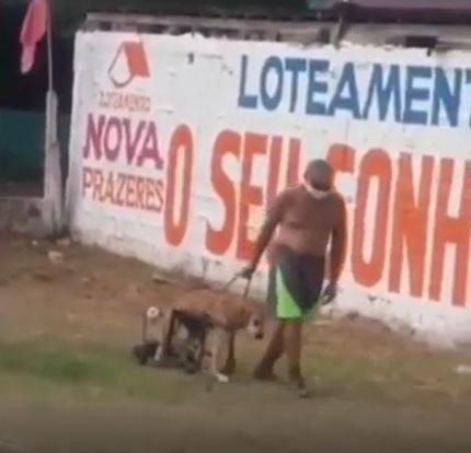 idoso passeia calmamente cachorrinho deficiente