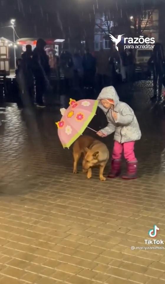 menina cede guarda-chuva para cachorrinho de rua