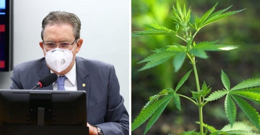 comissão câmara legaliza cultivo cannabis fins medicinais