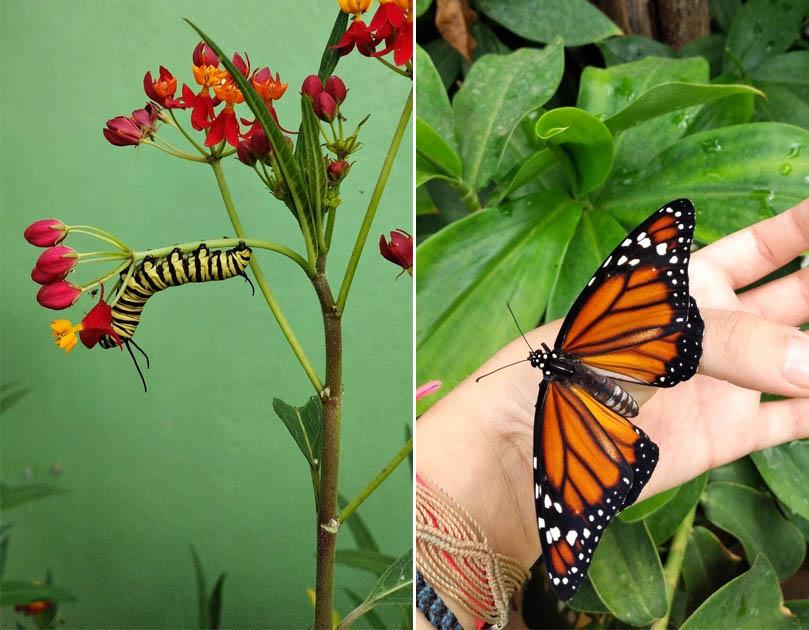 lagarta borboleta sobre flor