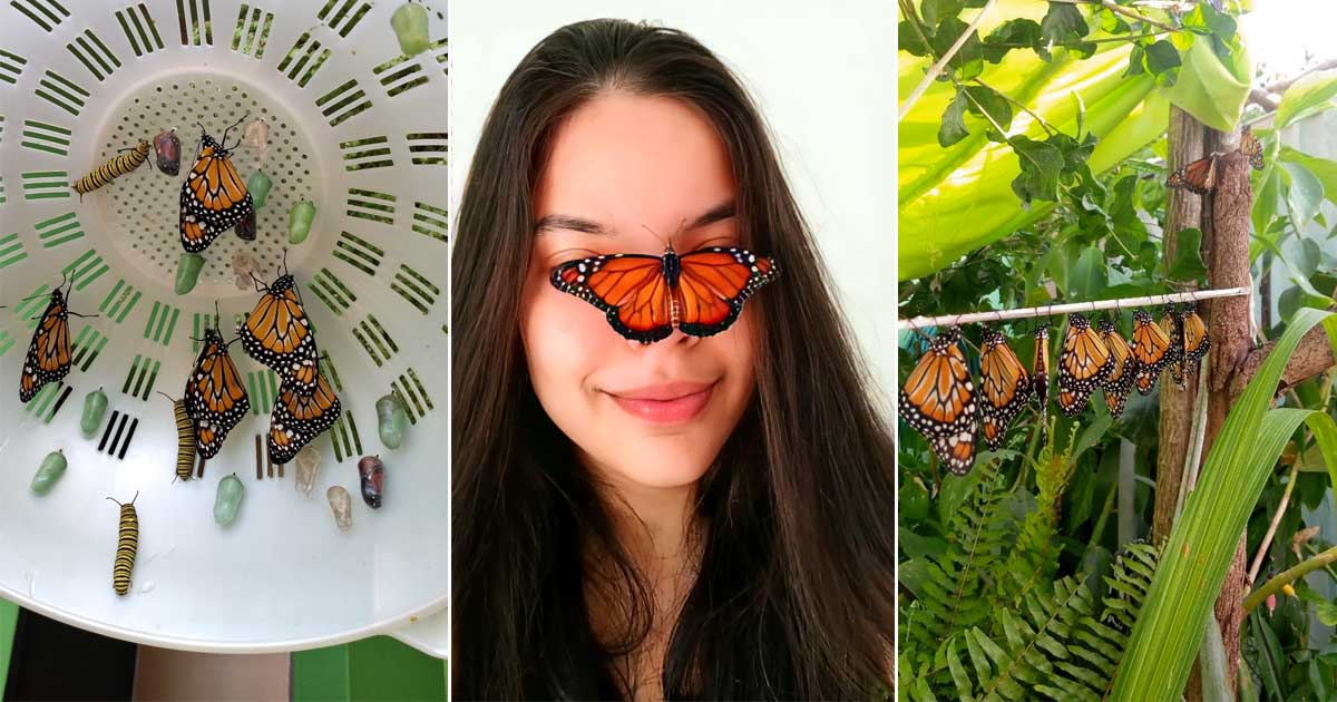 borboleta pousa nariz menina
