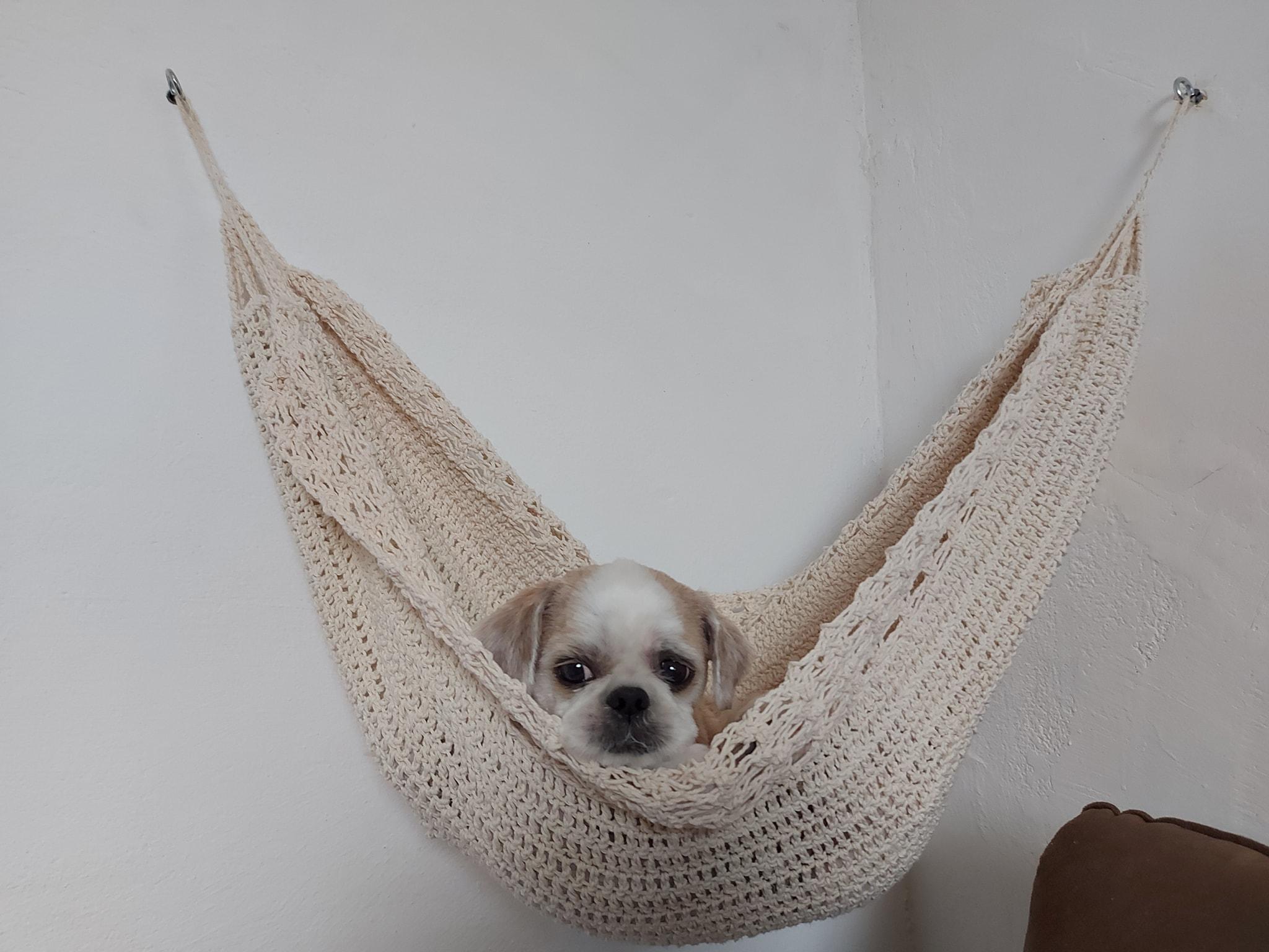 vovó tricota redes aconchegantes gata e cachorro da família