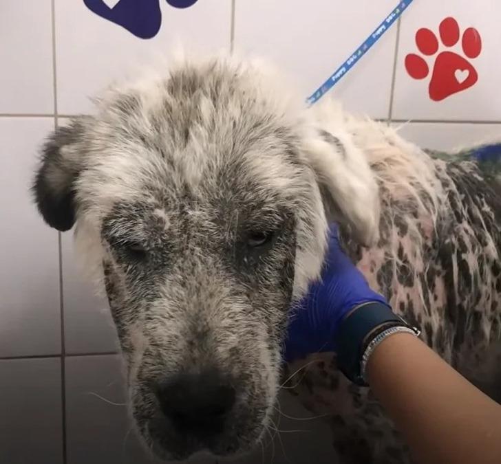 cadela de rua doença de pele