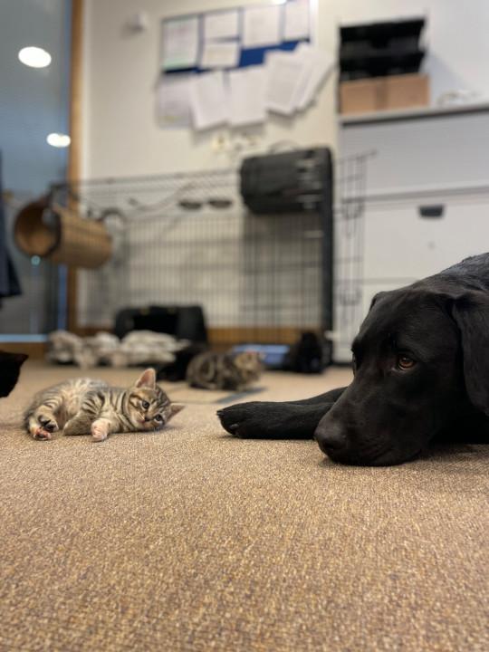 cachorro acolhe gatinhos órfãos