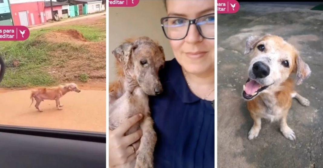 protetora resgata cãozinho rua esquelético