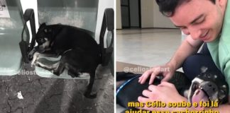 cachorrinho esperou tutor falecido hospital adotado
