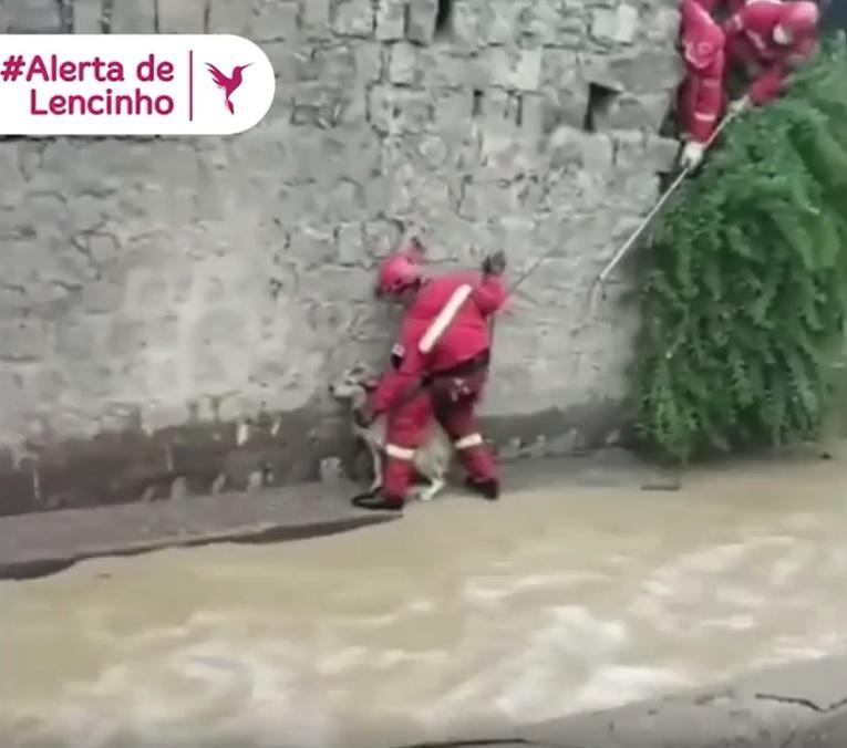 Bombero rescata a cachorro atrapado en fuerte corriente en México [VÍDEO]