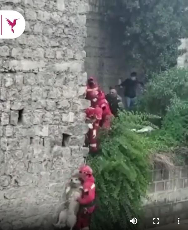 bombeiro resgata cachorrinho preso correnteza