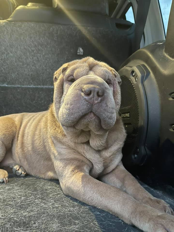 homem paga reabilitação pessoa roubou seu cachorro
