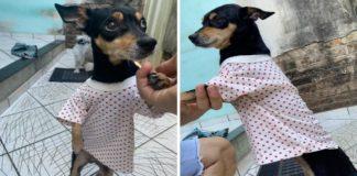 cadela blusinha de presente roupa hospital
