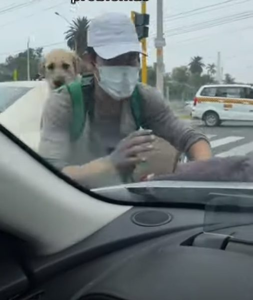 jovem trabalha semaforo com seu cachorro
