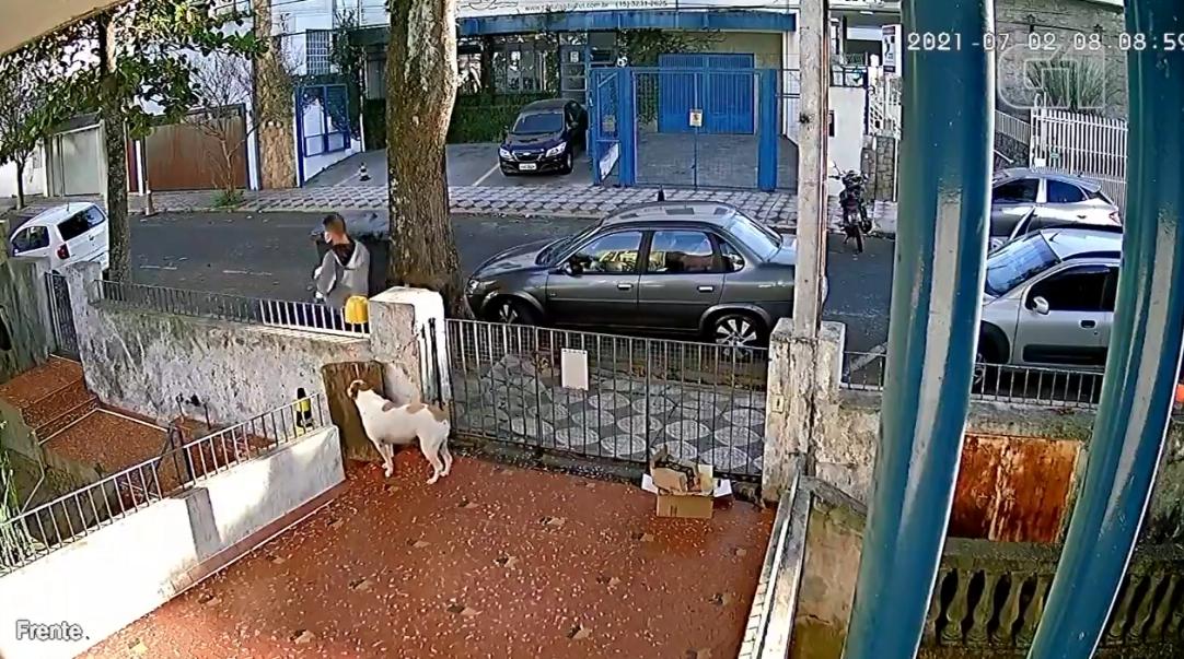 cadela ganha roupinha de presente após ser furtada