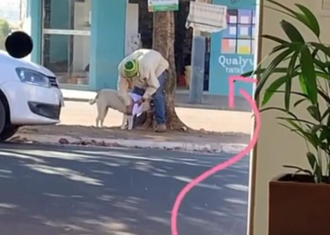 catador veste cadela agasalho varal solidário