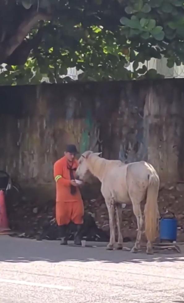 gari interrompe trabalho dar água cavalo