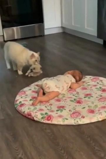 gata leva filhote fazer companhia bebê