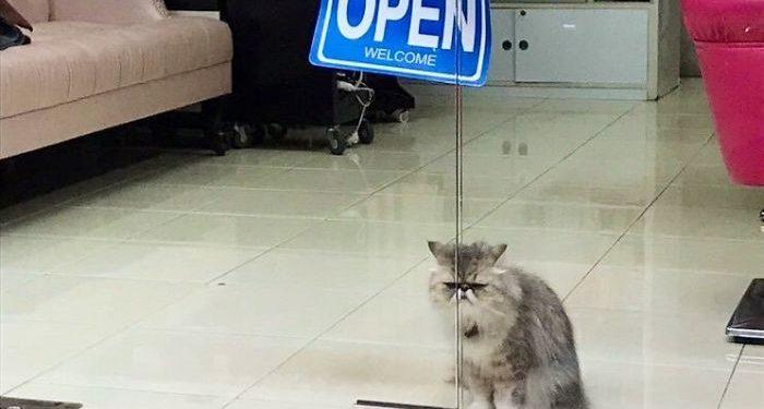 gatos invadem lojas pensam que são os donos fotos