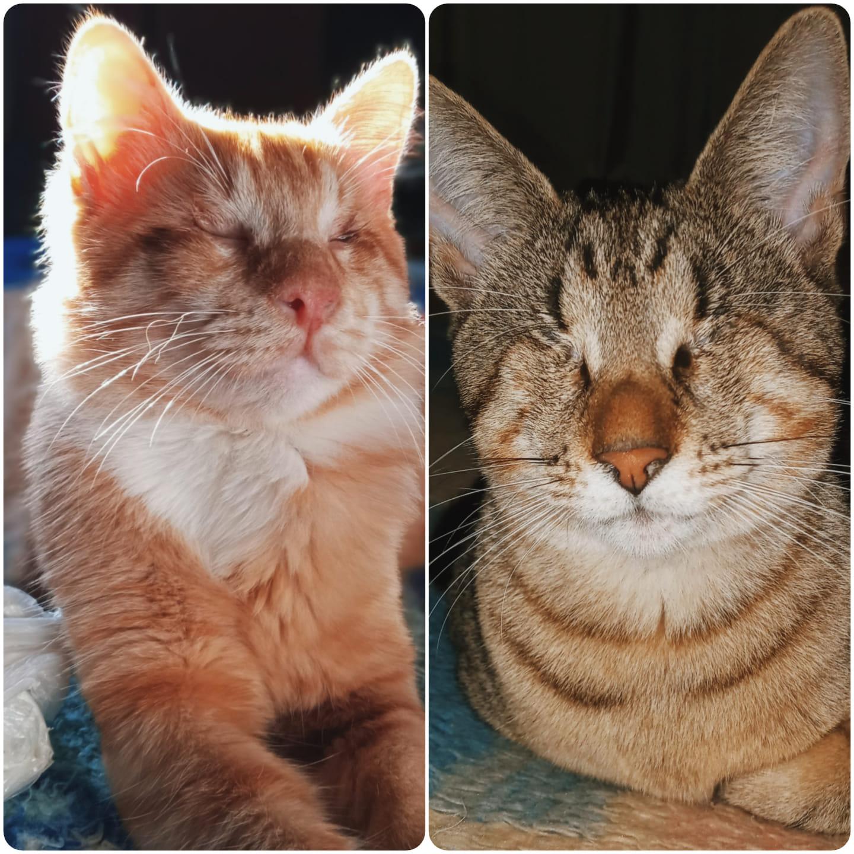 casal gatos cegos vítimas maus-tratos