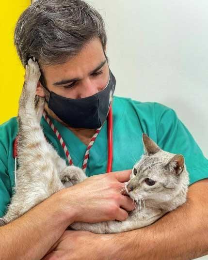veterinário dança samba distrair cachorro e vacinar