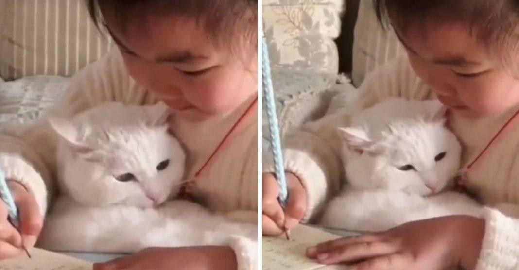 menina ganha gatinho de estimação não desgruda dele nem pra estudar