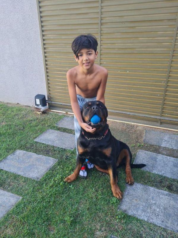 menino salva cão rottweiler de afogamento