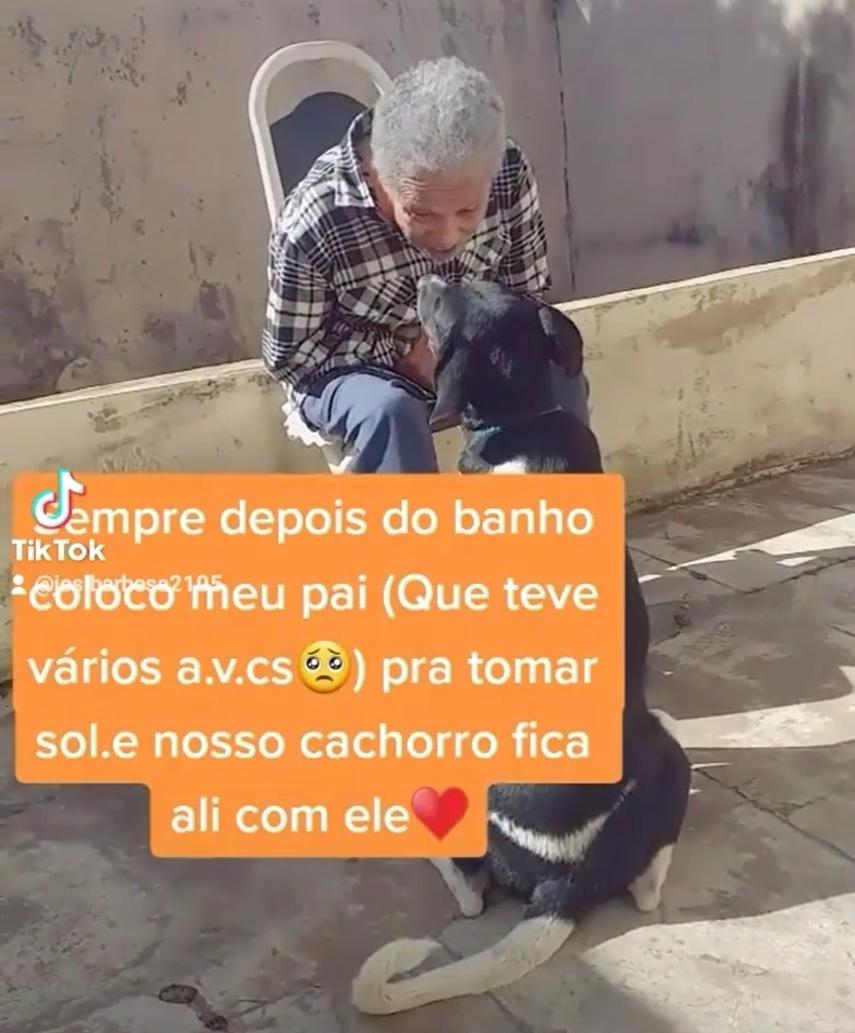 cãozinho faz companhia idoso sofreu avc