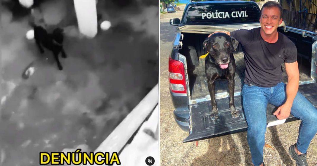 cachorro preso porão clínica veterinária doação sangue