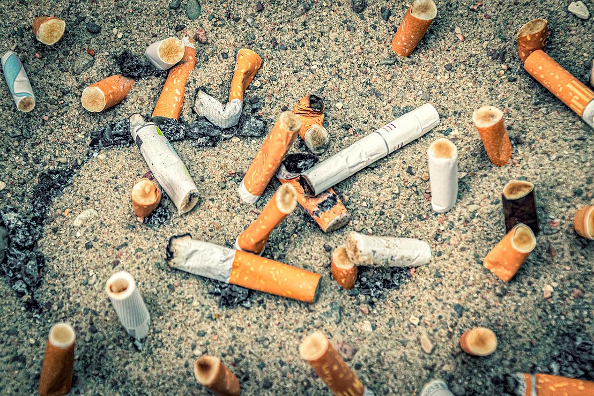 ecofilter fungo transforma bitucas cigarro em celulose limpa