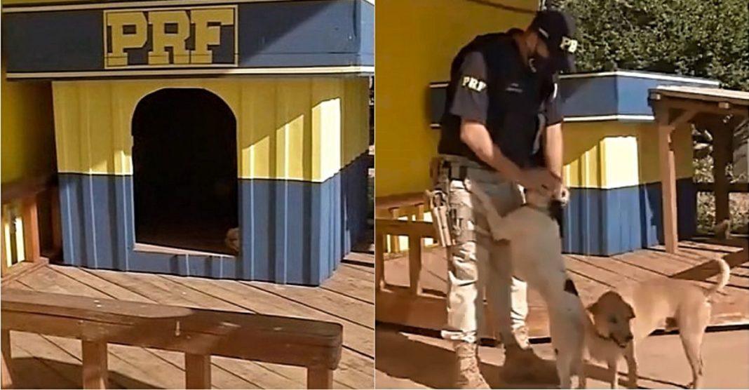 cães resgatados policiais casinha construída detentos ressocialização