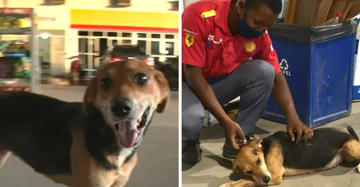 cadela de rua adotada frentista posto