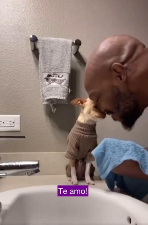 tutor amoroso acalma pinscher não gosta tomar banho