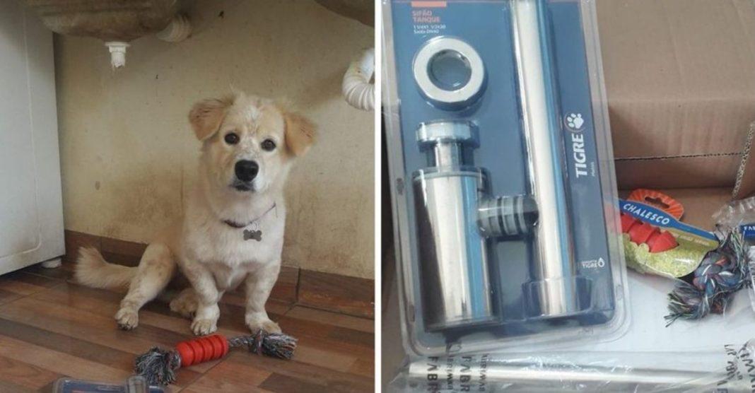 tutora ganha sifão ferro frear destruição cachorrinha