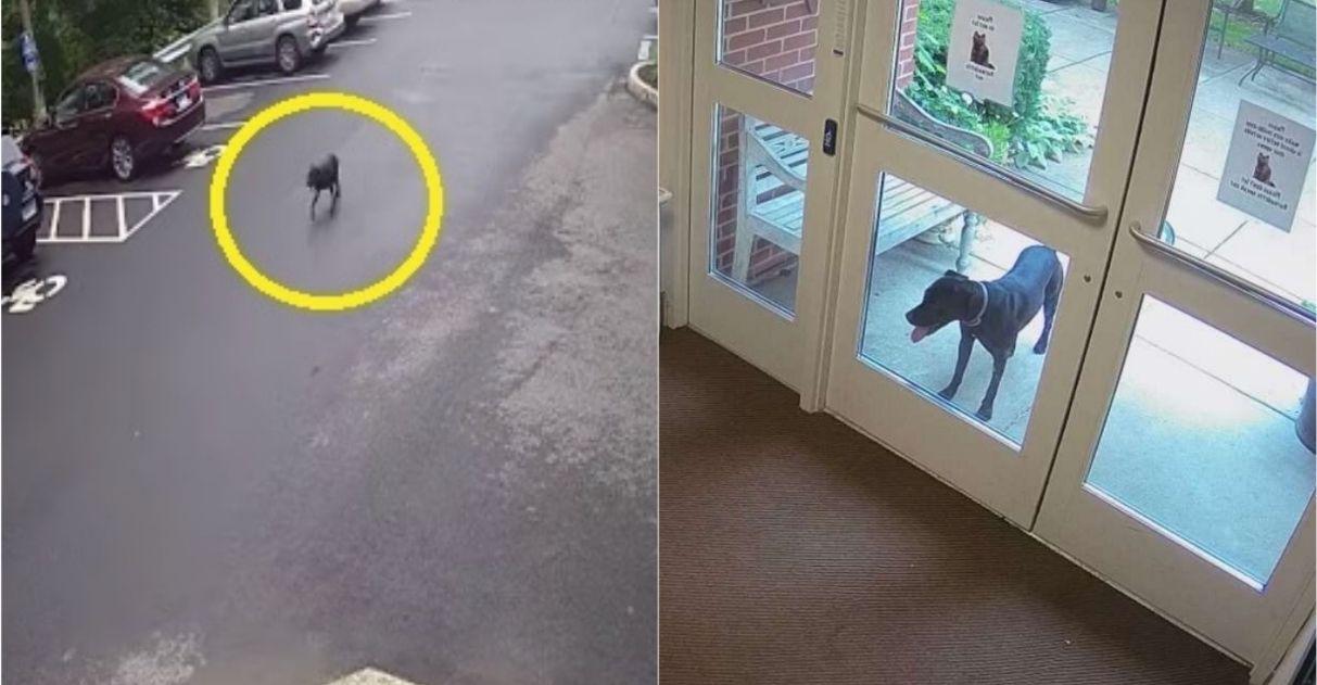cachorra anda quilômetros para fazer visita tutora trabalho
