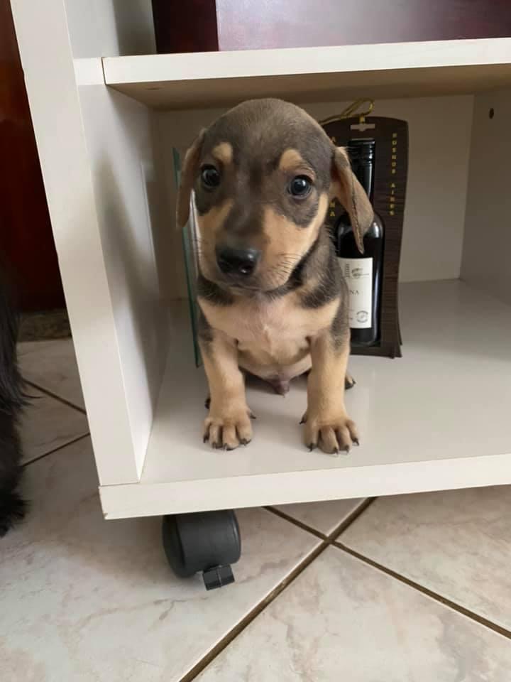 família adota filhote cachorro abandonado