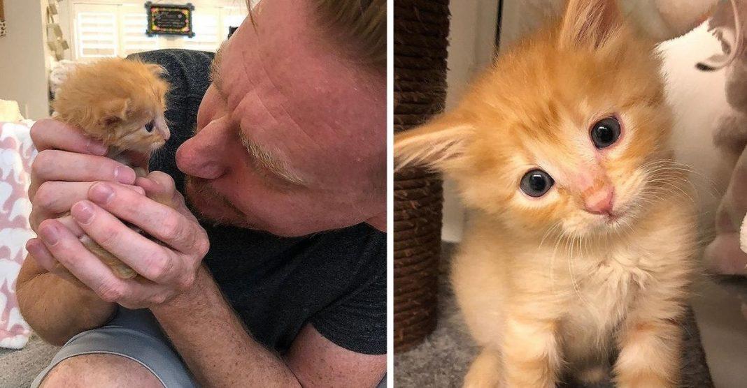 filhote gato resgatado das ruas recuperação abrigo