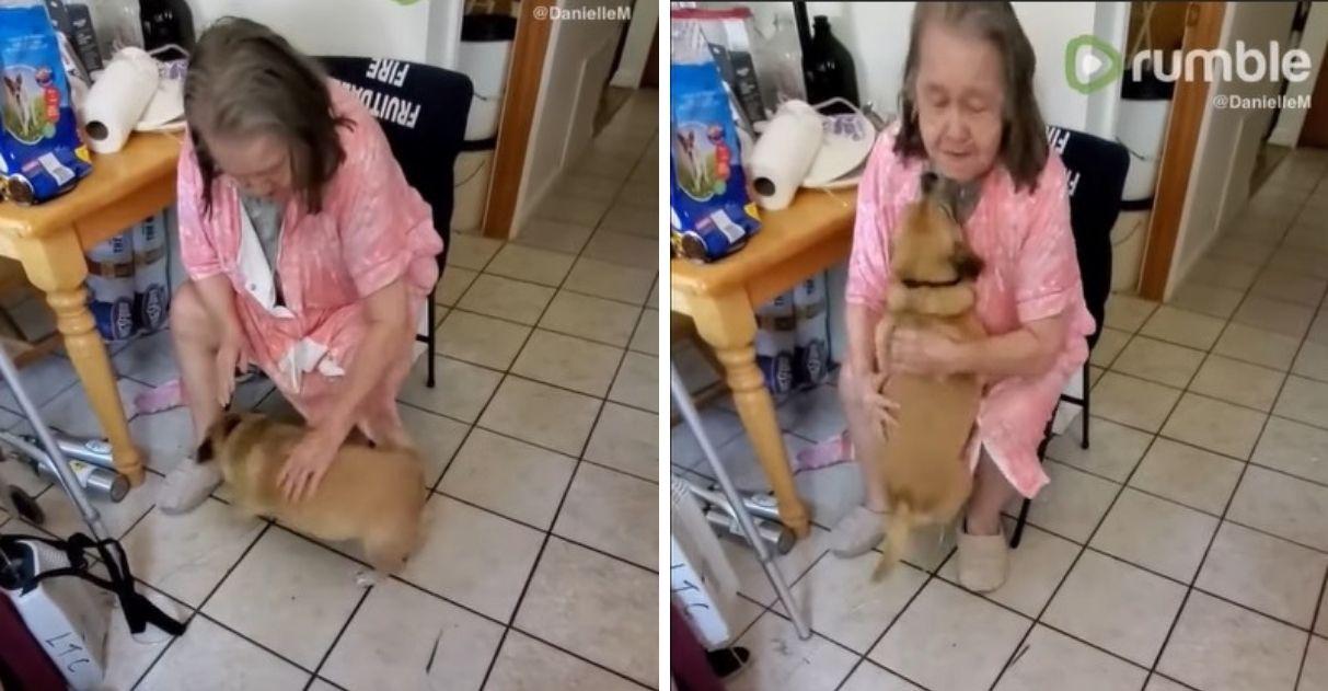 idosa recebida casa amor carinho cachorro vídeo
