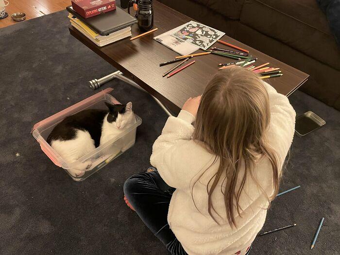 gatos folgados cochilos lugares errados