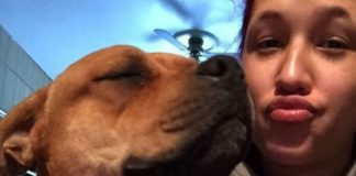 mulher encontra cachorro perdido enquanto procura outro adoção
