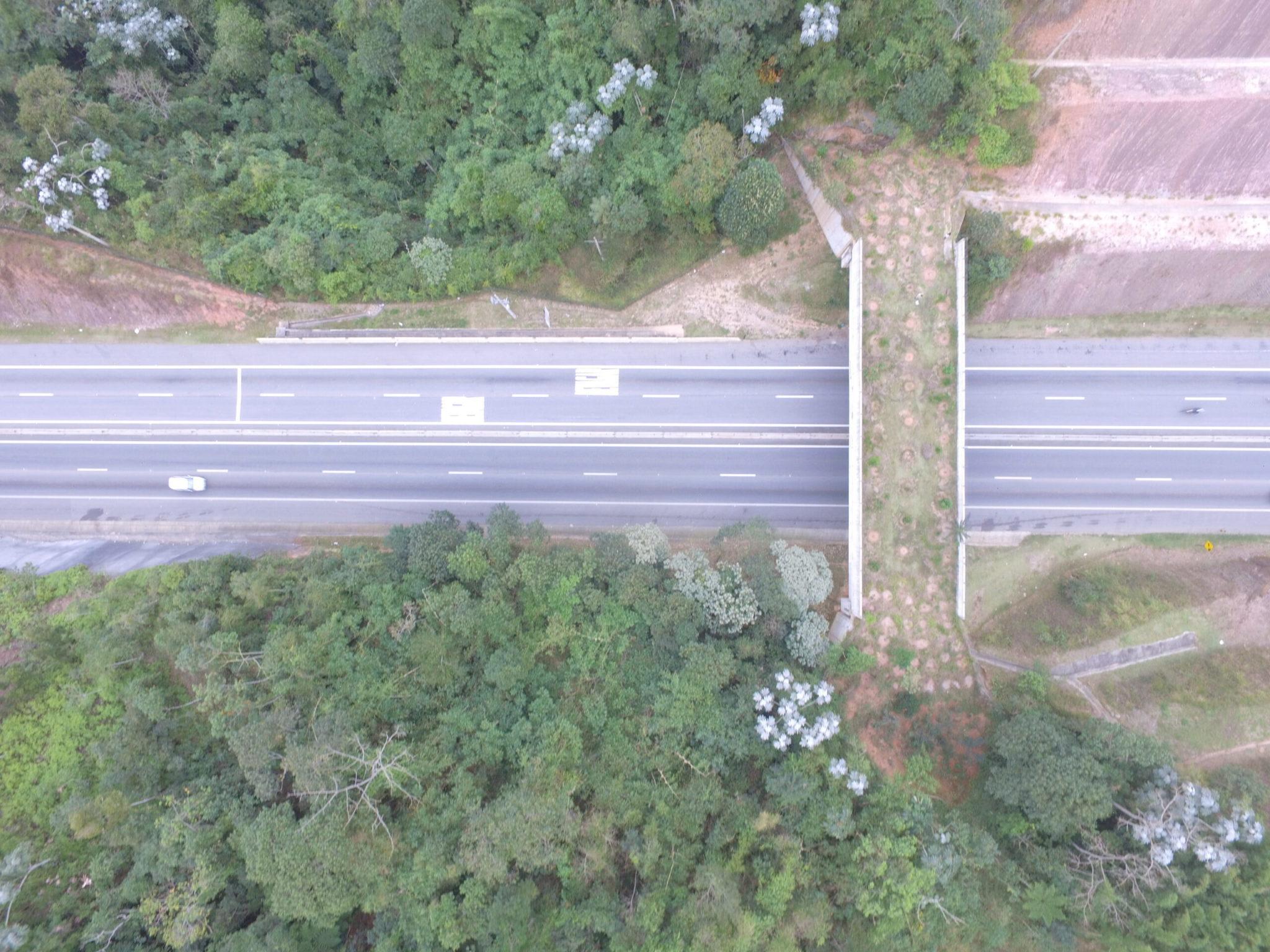 ponte verde permite passagem animais silvestres rodovia sp