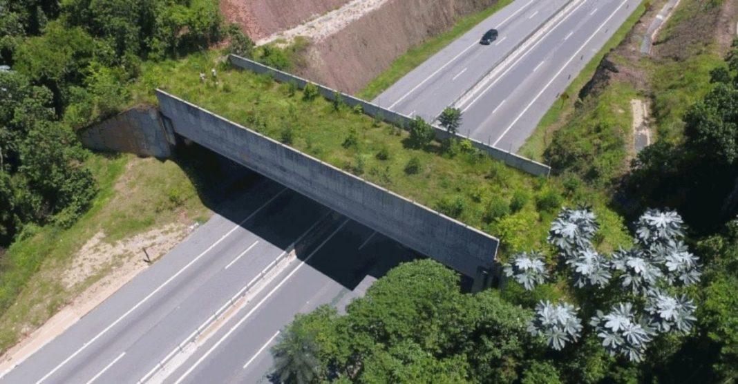 """Ponte verde"""" em rodovia de SP permitirá a passagem de animais silvestres"""