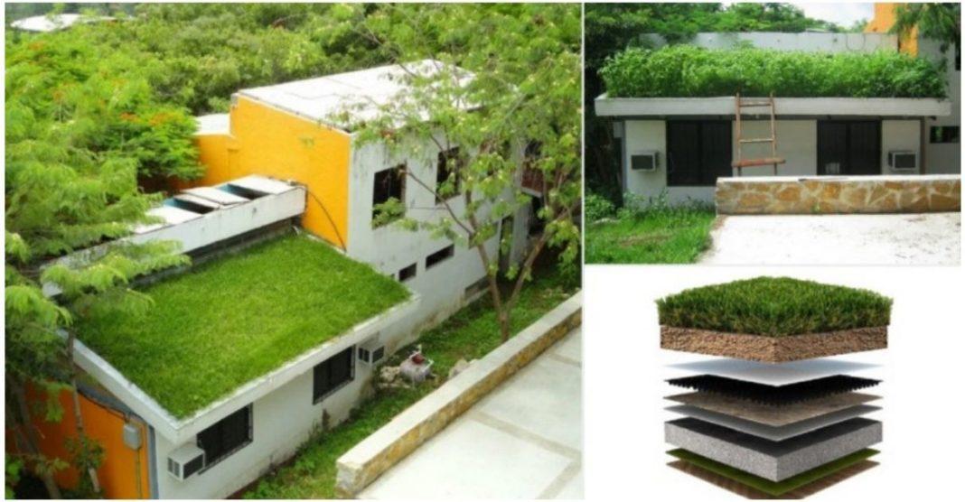 telhado verde resfria ambientes