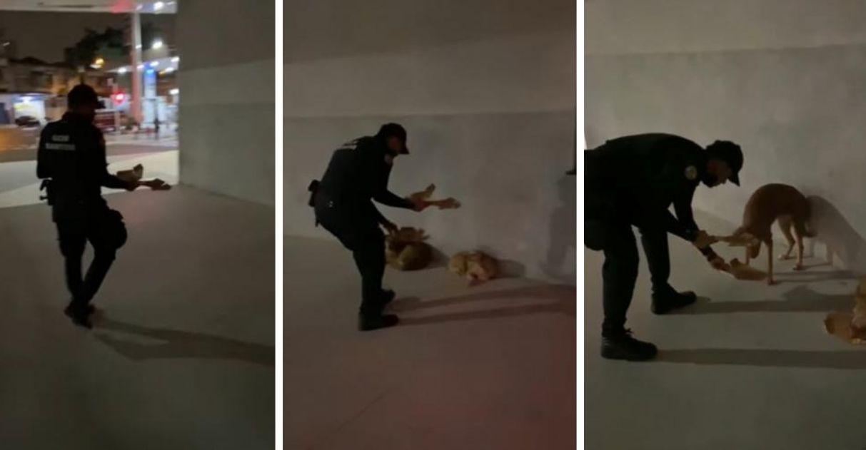 guarda oferece marmitas alimentar cães de rua