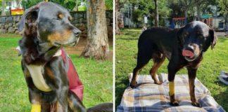 abrigo leva cachorro doença terminal último passeio